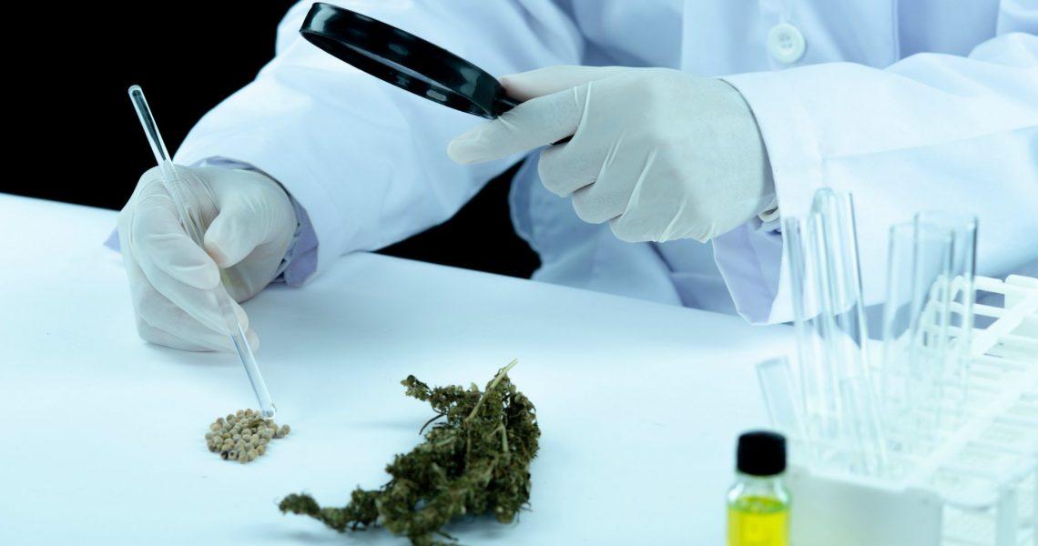 GreenCare deverá começar a produzir medicamentos à base de Cannabis