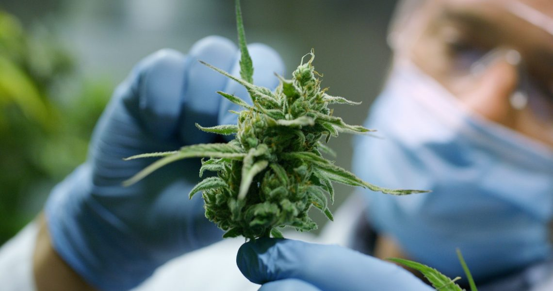 Produtos à base de Cannabis